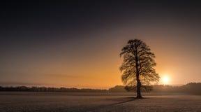 Nascer do sol de Frost da árvore da manhã do inverno Fotografia de Stock
