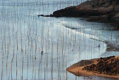 Nascer do sol de Infertidal Mudflat de Xiapu fotografia de stock