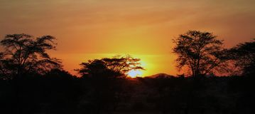 Nascer do sol de Kenya no Masai Mara fotos de stock royalty free