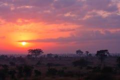 Nascer do sol de Kruger Foto de Stock Royalty Free