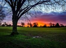 Nascer do sol de néon com silhueta da árvore Fotos de Stock Royalty Free