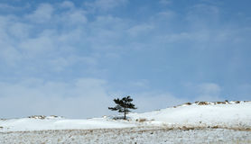 Nascer do sol do amanhecer em estepes de Tazheran Os montes cobertos de neve são coloridos nas máscaras do ultravioleta Fotos de Stock Royalty Free