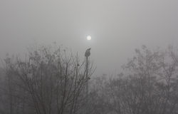 Nascer do sol do corvo Fotografia de Stock Royalty Free
