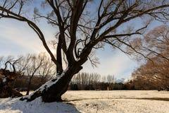 Nascer do sol do inverno através da árvore Imagens de Stock