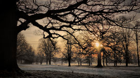 Nascer do sol do inverno, Rousham, Oxfordshire Foto de Stock Royalty Free