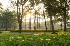 Nascer do sol do jardim Imagens de Stock Royalty Free