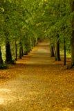 Nascer do sol do outono na floresta Fotografia de Stock