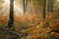 Nascer do sol do outono nas dunas S.P. de Indiana. Fotografia de Stock