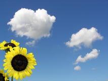 Nascer do sol do verão Fotografia de Stock