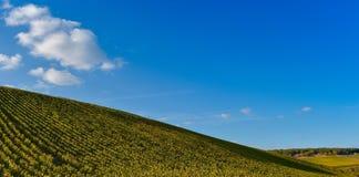 Nascer do sol do vinhedo - Champagne Vineyard Imagem de Stock