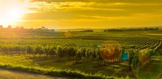 Nascer do sol do vinhedo - vinhedo do Paisagem-Bordéus Imagens de Stock Royalty Free
