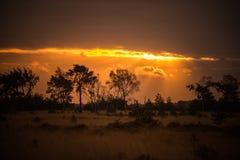 Nascer do sol dourado Foto de Stock Royalty Free