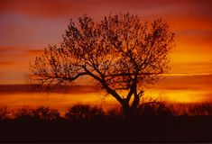 Nascer do sol e árvore Imagem de Stock