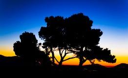 Nascer do sol e a árvore Fotos de Stock Royalty Free