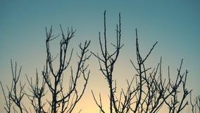 Nascer do sol e árvore do inverno sem folhas em um vento vídeos de arquivo