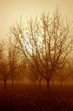 Nascer do sol e árvores de noz Foto de Stock