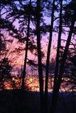 Nascer do sol e árvores mostradas em silhueta Foto de Stock