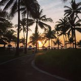 Nascer do sol e palmeiras em Bali Imagem de Stock Royalty Free