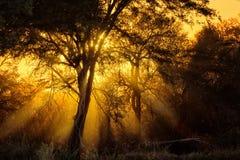 Nascer do sol em África Imagem de Stock Royalty Free