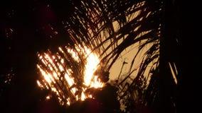Nascer do sol em Kalama - Kailua, Hawai'i Foto de Stock