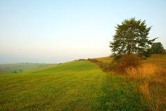 Nascer do sol em prados com uma árvore Fotos de Stock Royalty Free