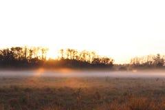 Nascer do sol em um campo com névoa pesada e orvalho na grama fotografia de stock royalty free