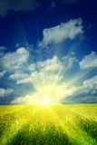 Nascer do sol em um campo de trigo imagens de stock
