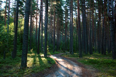 Nascer do sol em uma madeira. Imagens de Stock