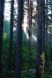 Nascer do sol em uma madeira. fotografia de stock