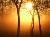 Nascer do sol em uma manhã enevoada Foto de Stock Royalty Free