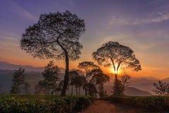 Nascer do sol em uma plantação II Fotografia de Stock Royalty Free