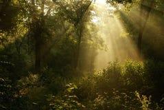Nascer do sol enevoado Fotografia de Stock Royalty Free