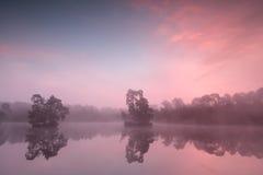 Nascer do sol enevoado cor-de-rosa bonito sobre o lago selvagem Imagem de Stock