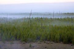 Nascer do sol enevoado da floresta Imagem de Stock Royalty Free