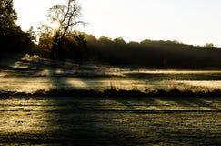 Nascer do sol enevoado do alvorecer de fevereiro através de um campo de golfe Imagem de Stock Royalty Free