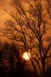 Nascer do sol enevoado do outono através das árvores imagem de stock