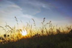 Nascer do sol enevoado sobre a grama imagem de stock royalty free