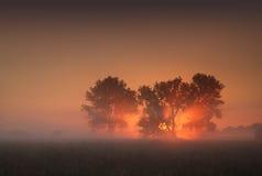 Nascer do sol entre árvores em um prado enevoado Fotografia de Stock Royalty Free