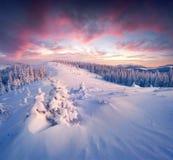 Nascer do sol fantástico do inverno em montanhas Carpathian com tampa de neve foto de stock