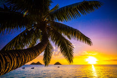 Nascer do sol havaiano foto de stock