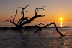 Nascer do sol - ilha de Jekyll, Geórgia foto de stock royalty free