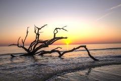 Nascer do sol - ilha de Jekyll, Geórgia fotos de stock