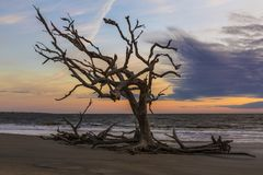Nascer do sol - ilha de Jekyll, Geórgia fotografia de stock