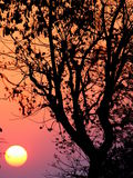 Nascer do sol indiano fotos de stock