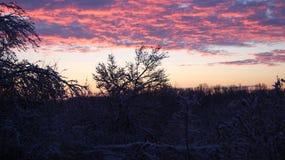 Nascer do sol do inverno sobre as árvores fotografia de stock