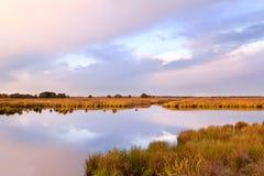 Nascer do sol macio delicado sobre o pântano Foto de Stock