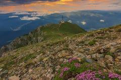 Nascer do sol majestoso e flores cor-de-rosa nas montanhas, montanhas de Bucegi, Carpathians, Roménia Imagem de Stock
