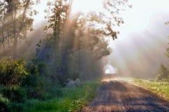 Nascer do sol na floresta Imagens de Stock