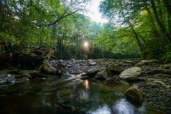 Nascer do sol na floresta fotos de stock