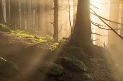 Nascer do sol na floresta Fotografia de Stock